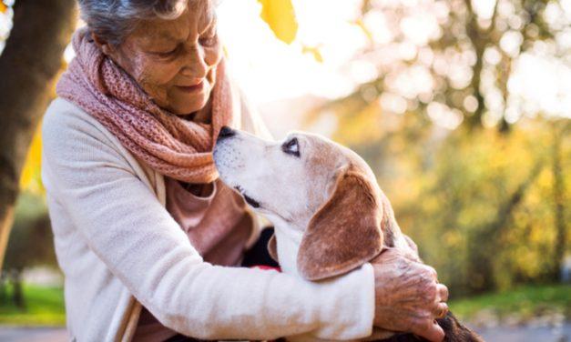 Perros capaces de detectar alteraciones en la glucosa